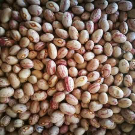 pu-beans