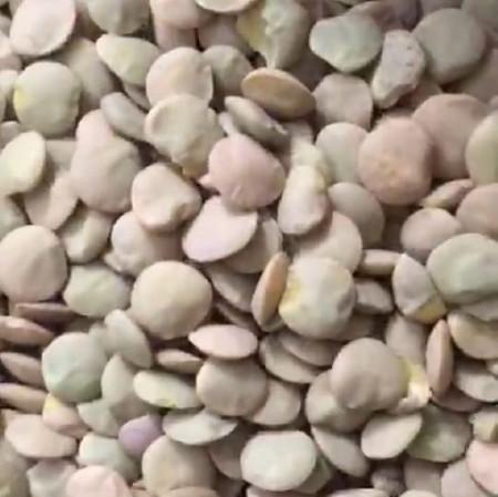 pu-lentils-green