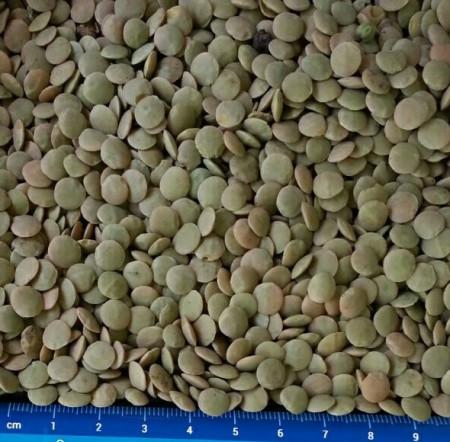 pu-lentils-6