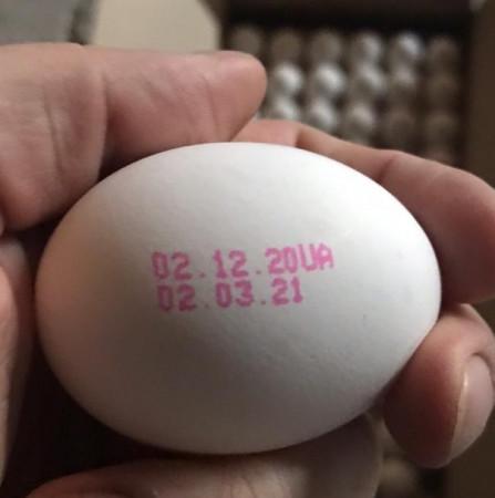 1302clone_fo-eggs